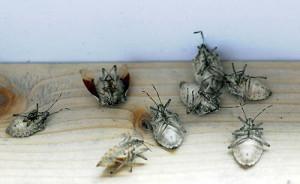 dead-bugs