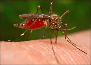 mosquitobiting