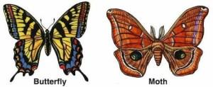 butterflyvsmoth