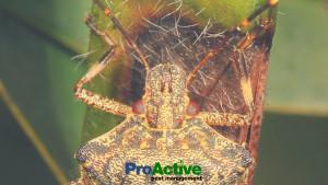 stink-bug-protection