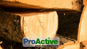 firewood-pest-prevention
