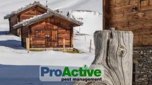 winter-pest-control